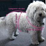 patron gratuit tricot manteau chien