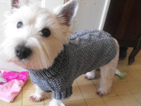 tricot manteau chien gratuit