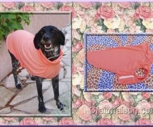 patron couture pour chien gratuit