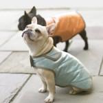 patron couture gratuit manteau pour chien