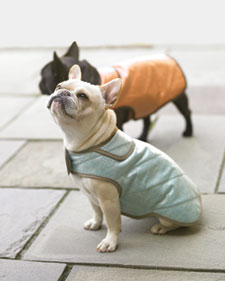 patron gratuit manteau chien